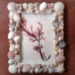 fill the frames with photos from your vacation at the beach these frames were made by my daughters and hold seaweedart they created
