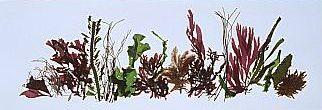 collage of seaweed pressed on paper