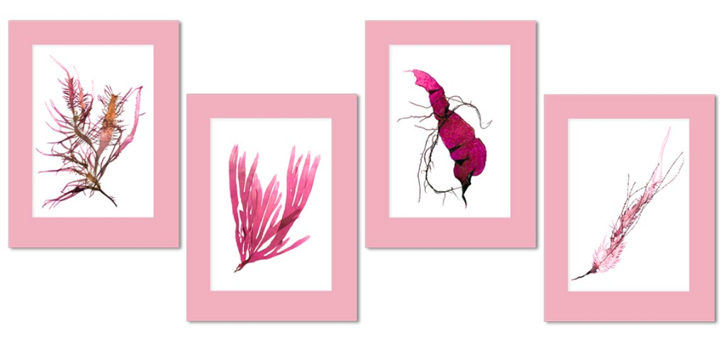 """images of pressed seaweed in pink"""