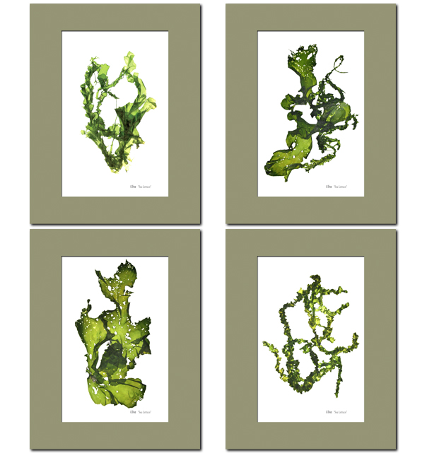 Sea Lettuce Prints