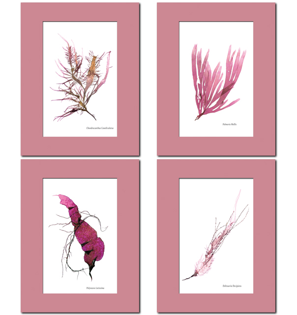 Pink Seaweed Prints