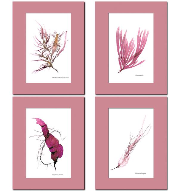 Pink Seaweed Prints