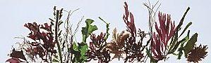seaweed-landscape4[1]