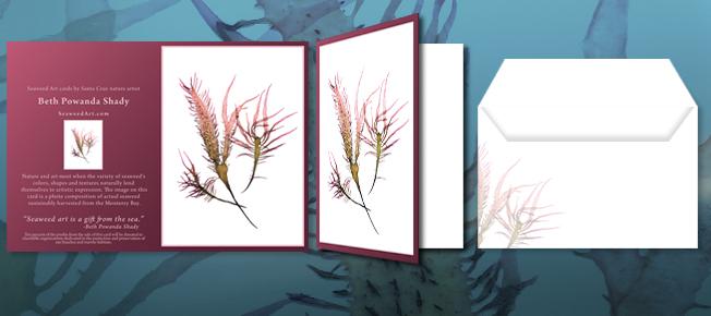 SeaweedArt Note Cards