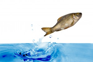 """image of fish jumping out of the water"""